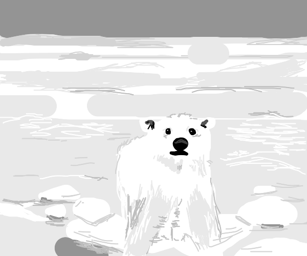 polar bear stuck on a floating piece of ice