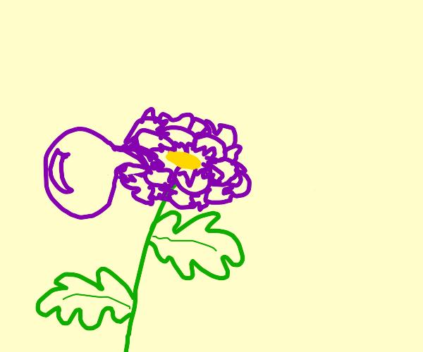 Misshapen flowers