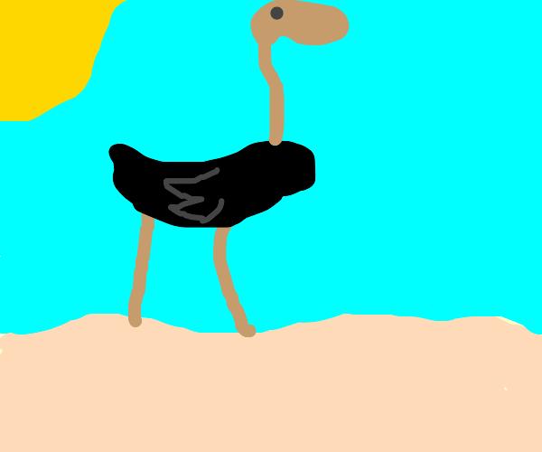 Ostrich enjoying the Beach
