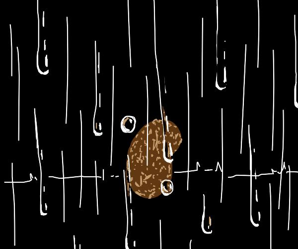 Potato in the rain