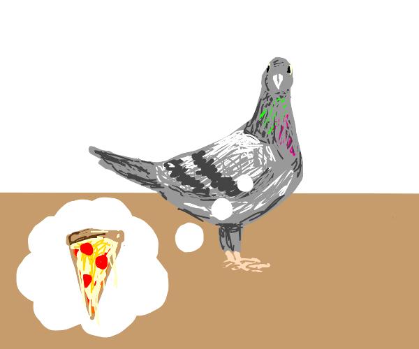 Pigeon wants pizza