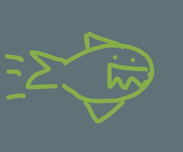 sharkpeedo