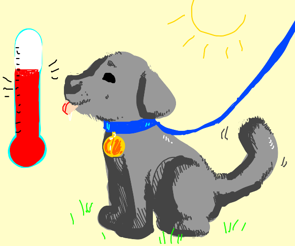 pup outside on a hot day