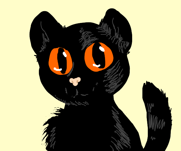 Black cat staring at you intently