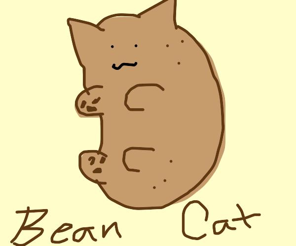 cat bean baby