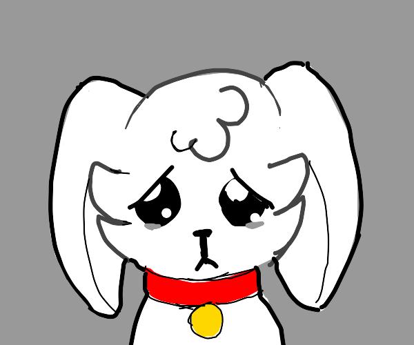 A sad puppy