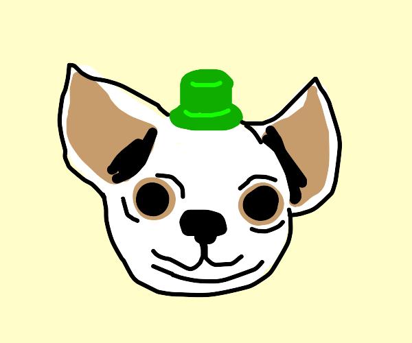 Chihuahua wearing a green hat