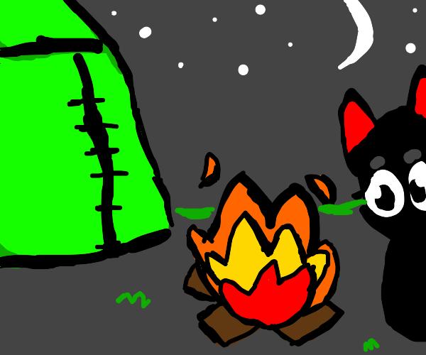 black cat camping :)