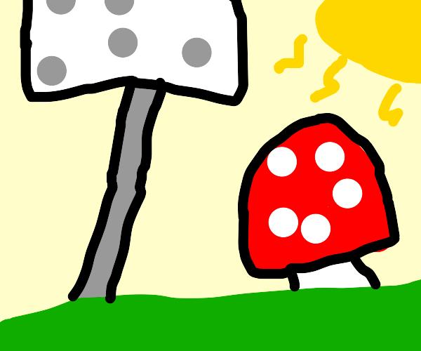 Big mushroom and little mushroom