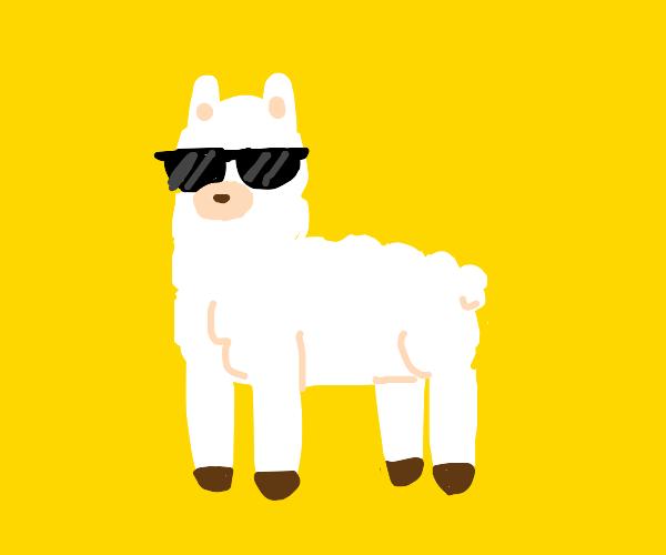 Cool alpaca