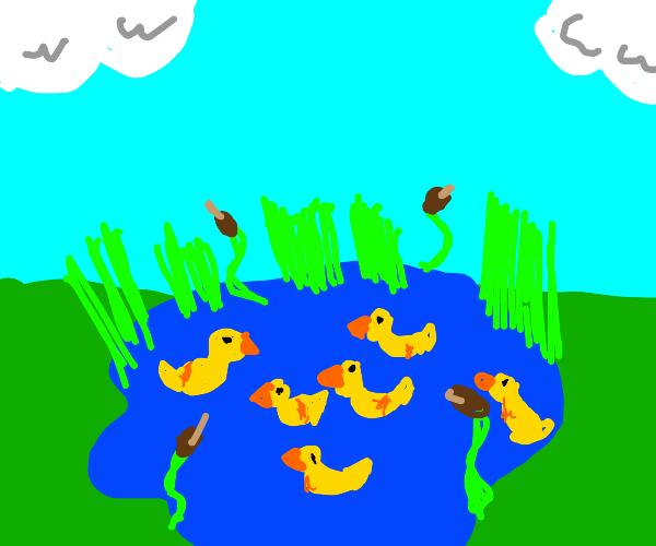 Flock of yellow rubber ducks