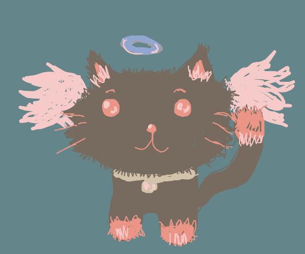 Black angel cat