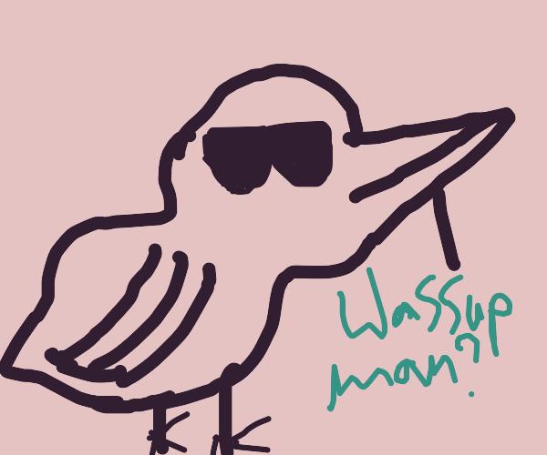 kool bird B)