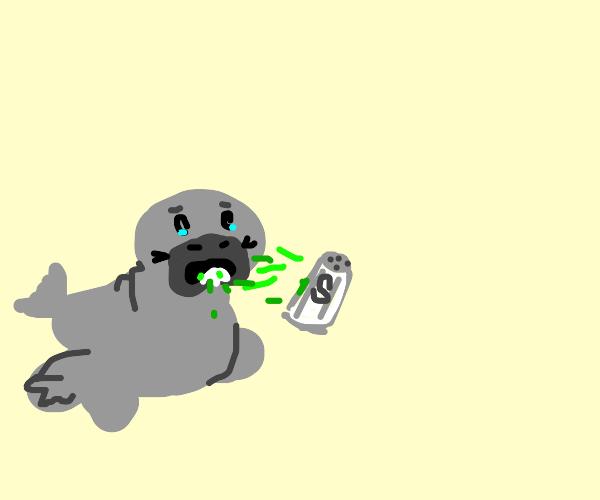 Manatee vomiting Salt