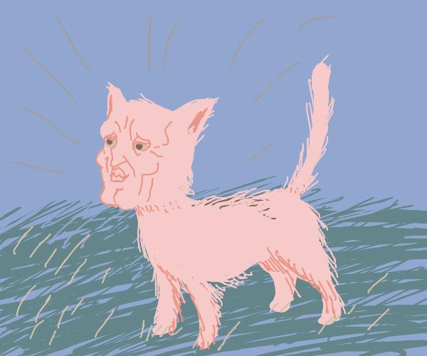 Pastel kitty cat