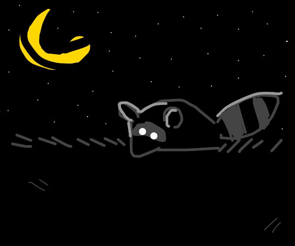 Raccoon in the night