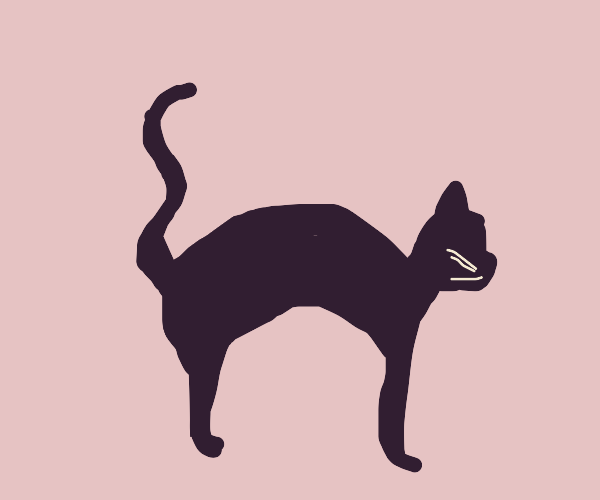 Black cat with a arched back