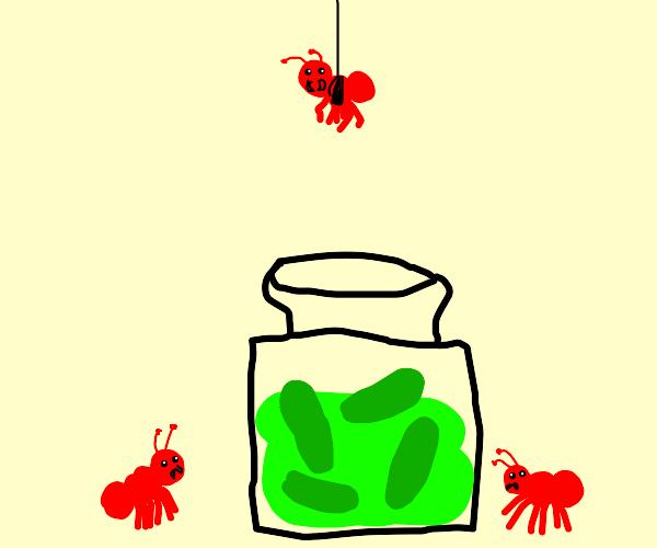 ants invading the pickle jar