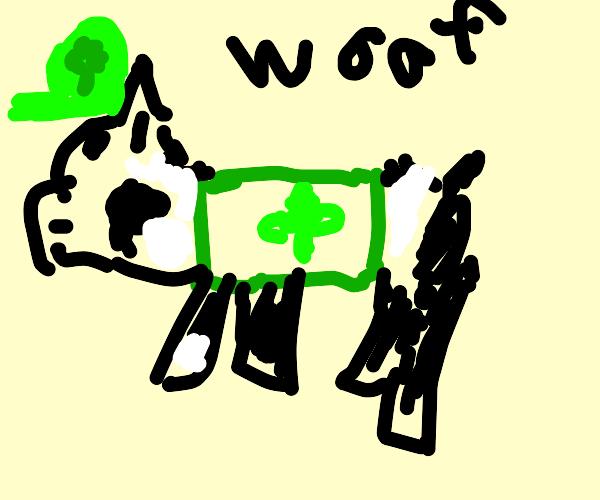 Boston terrier on St. Patrick's day