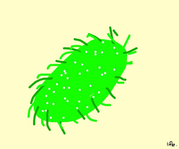 a small organism