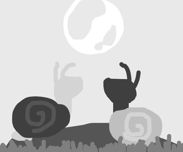 2 snails on a rock