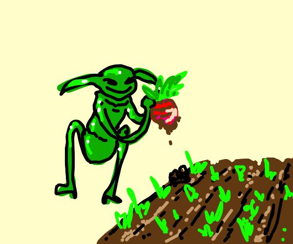 gardening goblin harvesting beets
