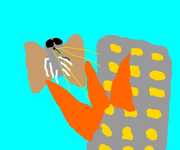 Killer moth destroys city