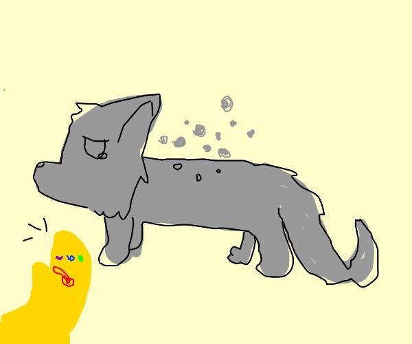 a wolf boi slowly disintegrates
