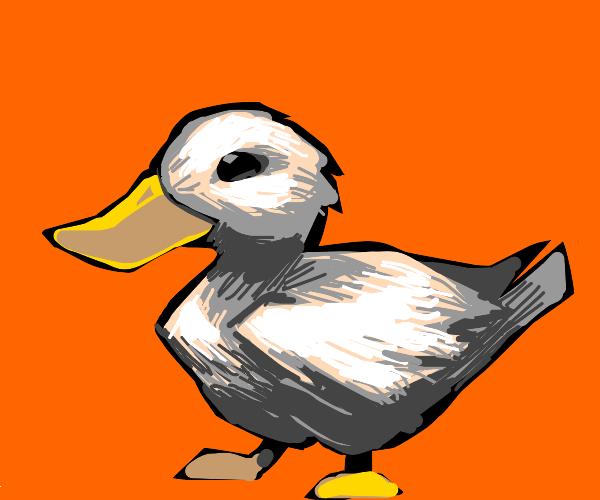 Duck with orange background