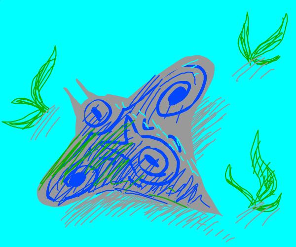 Stingray has a symbol on his back