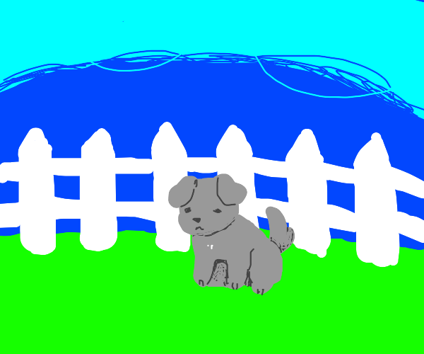 gray dog by a white picket fence