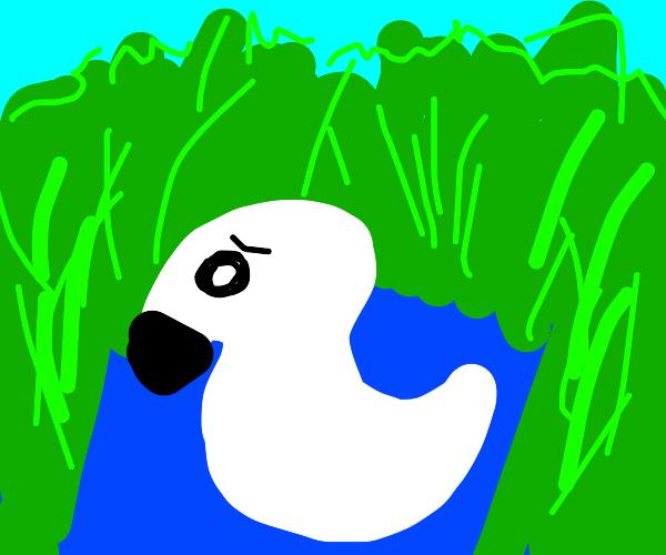 A Worried Swan