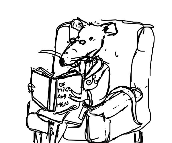 a rat reading a book