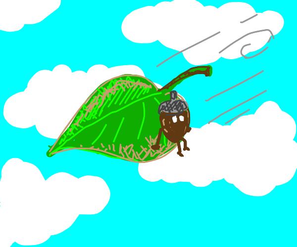 acorn on a leaf