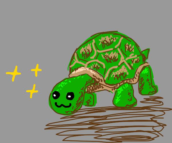 :3 turtle