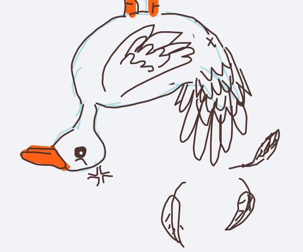 duck is hanging upside down