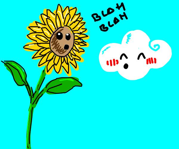 Kawaii clouds talk to sunflower