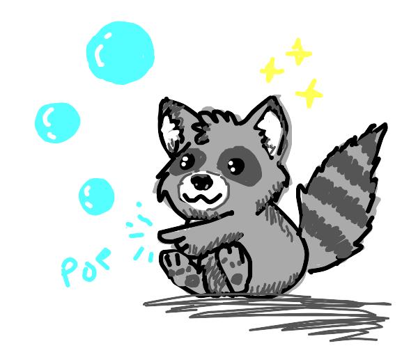 cute raccoon pops bubbles