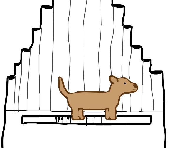 Pet Pipe Organ