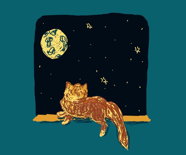Cat on windowsill, looking into the night