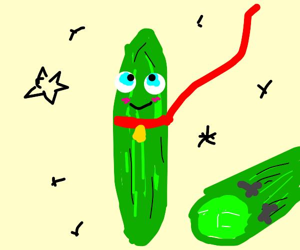 Pet Cucumber