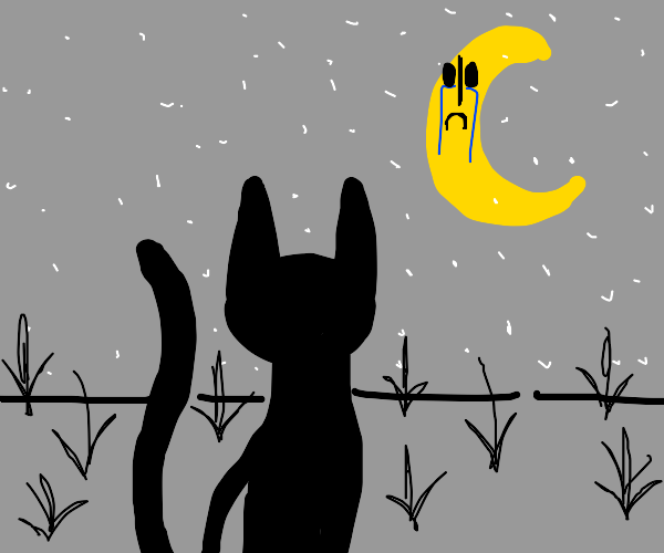 Cat watching moon crying