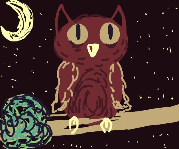 Owl on tree at night