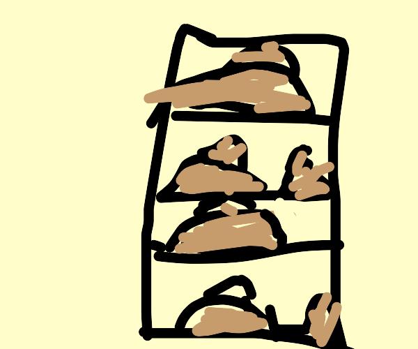 Gathering of turds on book shelf