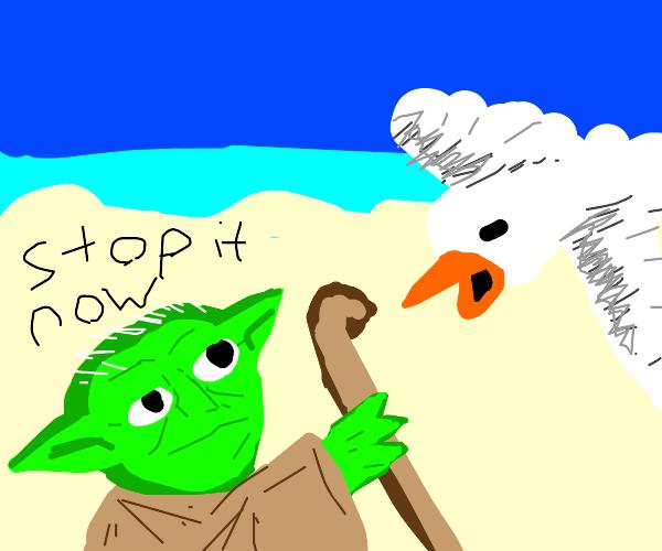 Seagulls mmmmmmm Stop it now!