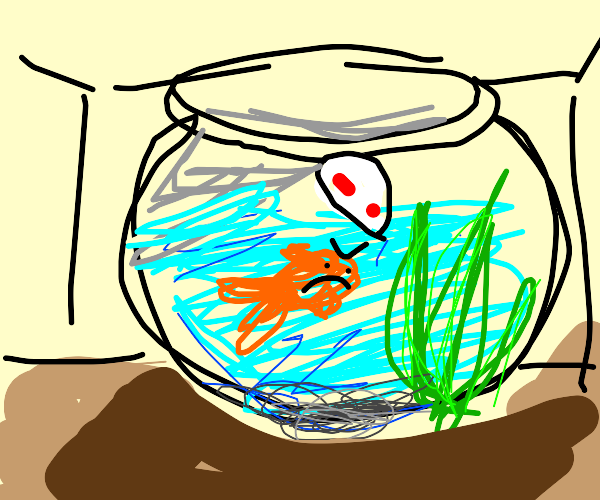 fish in a fishbowl yelling at a piece of kelp