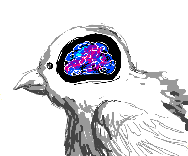 Galaxy in the brain of a bird