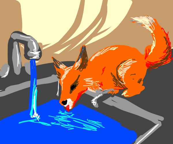 Fox drinking water on a sink