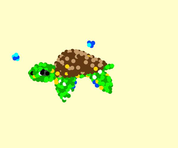 Coco Jumbo (turtle)