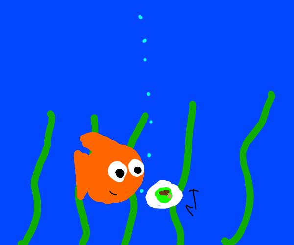 Goldfish making tea